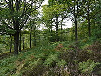 The forest of Rambouillet in Yvelines illustrates France's flora diversity.