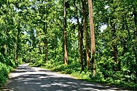 The National Highway passing through the Parakhowa forest