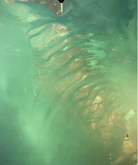 Aerial view of the Safety Valve from southern end of Key Biscayne (top) to Soldier Key