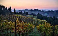 Vineyards in the Chianti region, Tuscany. The Italian food industry is well known for the high quality and variety of its products.