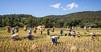 Thailand has long been one of the largest rice exporters in the world. Forty-nine percent of Thailand's labour force is employed in agriculture.