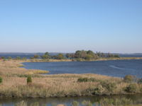 Tidal wetlands of the Chesapeake Bay, the largest estuary in the United States and the largest water feature in Maryland