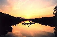 Typical brackish tidal river. Sunset over a marsh at Cardinal Cove on the Patuxent River