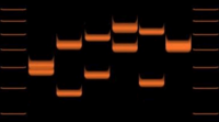 Variations of VNTR allele lengths in 6 individuals.
