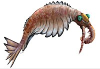 Anomalocaris canadensis is one of the many animal species that emerged in the Cambrian explosion, starting some 542 million years ago, and found in the fossil beds of the Burgess shale.