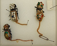 Zopheridae in jewellery at the Texas A&M University Insect Collection