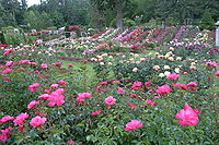 Portland's climate is conducive to the growth of roses. (Pictured: International Rose Test Garden)