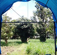 Anandashram has a green gazebo where you are surrounded by birds and butterflies all the time