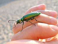 Human interactions with insects