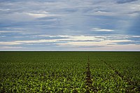 Soy plantation in Mato Grosso. In 2020, Brazil was the world's largest producer, with 130 million tons. Latin America produces half of the world's soybeans.