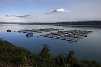 Salmon farming in Chile. One third of all salmon sold in the world comes from the country.