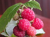 Serbia is among the world's largest producer of raspberries as of 2016