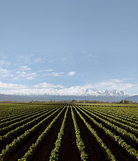 Argentine agriculture is relatively capital intensive, today providing about 7% of all employment.