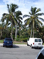 Coconut palms at the Gizella Kopsick Palm Arboretum in the northeastern part of the city.