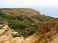 Coastal canyon in Torrey Pines State Reserve