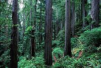 Redwood forests on private land near Smith's River, California, and at the Chetham Grove section of Grizzly Creek Redwoods State Park were used to film the forests of Endor in Return of the Jedi.