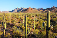 Sonoran Desert at Saguaro National Park