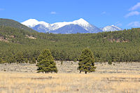 The San Francisco Peaks seen from Bellemont