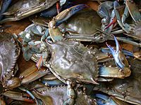 Blue crab was used on the eastern and southern coast of what is now the U.S. mainland.