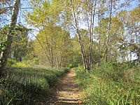 A trail on Deas Island in late September