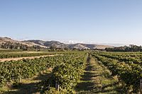 A vineyard in the Barossa Valley, one of Australia's major wine-producing regions. The Australian wine industry is the world's fourth largest exporter of wine.