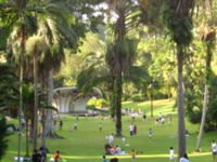 Singapore Botanic Gardens is a UNESCO World Heritage Site – one of three gardens in the world, and the only tropical garden, to be recognised as such.