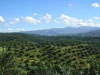 Vast palm oil plantation in Bogor, West Java. Indonesia is the world's largest producer of palm oil.