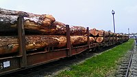 Cargo train on the move in Cameroon