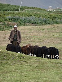 Local in Bamyan area