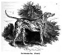A Dalmatian, published in 1859