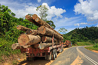 A lorry carrying timbers in Tawau, logging have contributed for over 50% of the state revenue.