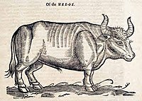 """The """"Ure-Ox"""" (Aurochs) by Edward Topsell, 1658"""
