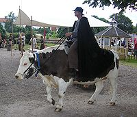Riding an ox in Hova, Sweden
