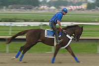 Smarty Jones at the Philadelphia Park Racetrack. Jones won the Kentucky Derby and Preakness Stakes in 2004.