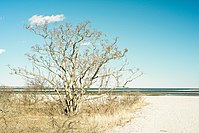 Tree on Short Beach in Stratford, Connecticut.