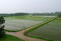Agricultural fields of Punjab during the monsoon
