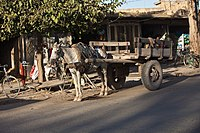 Horse carts are still used for carrying goods in some places