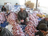 Workers processing pomegranates (anaar), which Afghanistan is famous for in Asia
