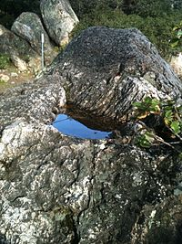This pit in the surface of a rock at Indian Rock Park is typical of those used by Ohlone Indians to grind acorns.