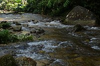 Forest Brook in Tapah Hills