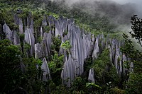 alt=Tall, light grey stone columns protruding above a forest|Pinnacles at Gunung Mulu National Park