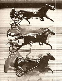 A photo finish record of the first triple dead heat in harness racing: Patchover, Payne Hall and Penny Maid at Freehold Raceway (US), October 1953