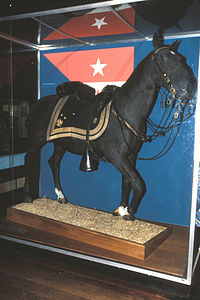 Rienzi, stuffed and on display at the National Museum of American History