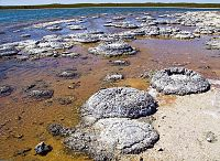 Lithified stromatolites on the shores of Lake Thetis, Western Australia. Archean stromatolites are the first direct fossil traces of life on Earth.