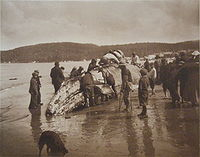 Makah Native Americans and a whale, The King of the Seas in the Hands of the Makahs, 1910 photograph by Asahel Curtis.