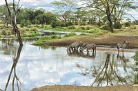 Site No. 156: Serengeti National Park, an example of a natural heritage site