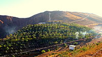 Eynali artificial forest in the north of the Tabriz