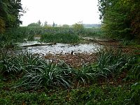 A silted lake located in Eichhorst, Germany