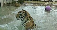 Mike VI in water