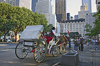 Horse-drawn carriage by the park